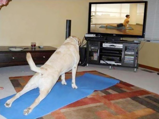 funny-animals-doing-yoga-17