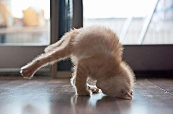 funny-animals-doing-yoga-18