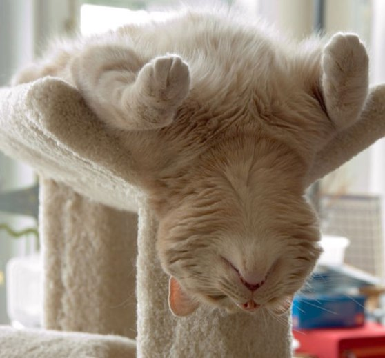 funny-animals-doing-yoga-22