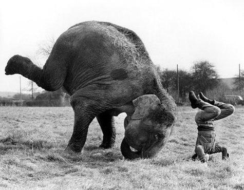 funny-animals-doing-yoga-25